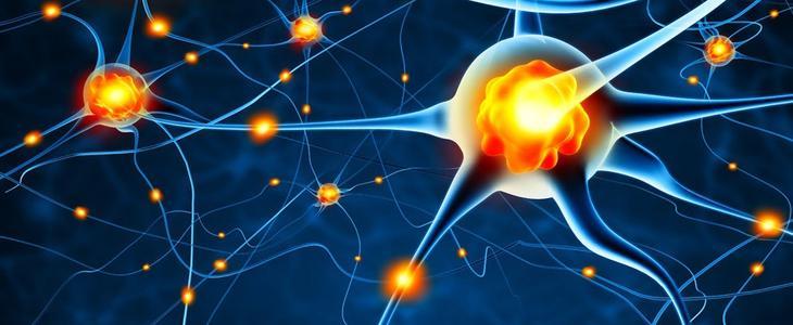 活跃的奖赏系统:美好的艺术与大脑的波动